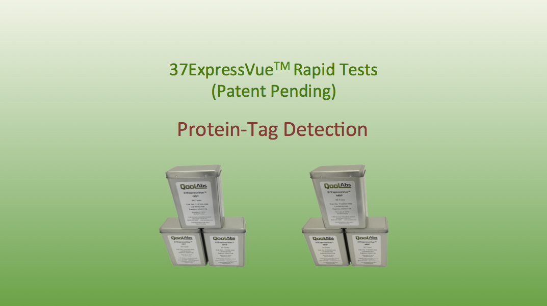 37ExpressVue Rapid Protein Detection Protein Tag Detection